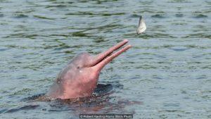 """Розовый дельфин на """"Бит Жизни!"""""""