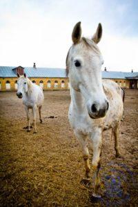 Кони на прогулке