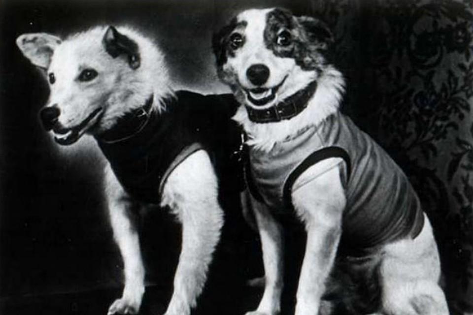 Белка-и-Стрелка-первые собаки в космосе