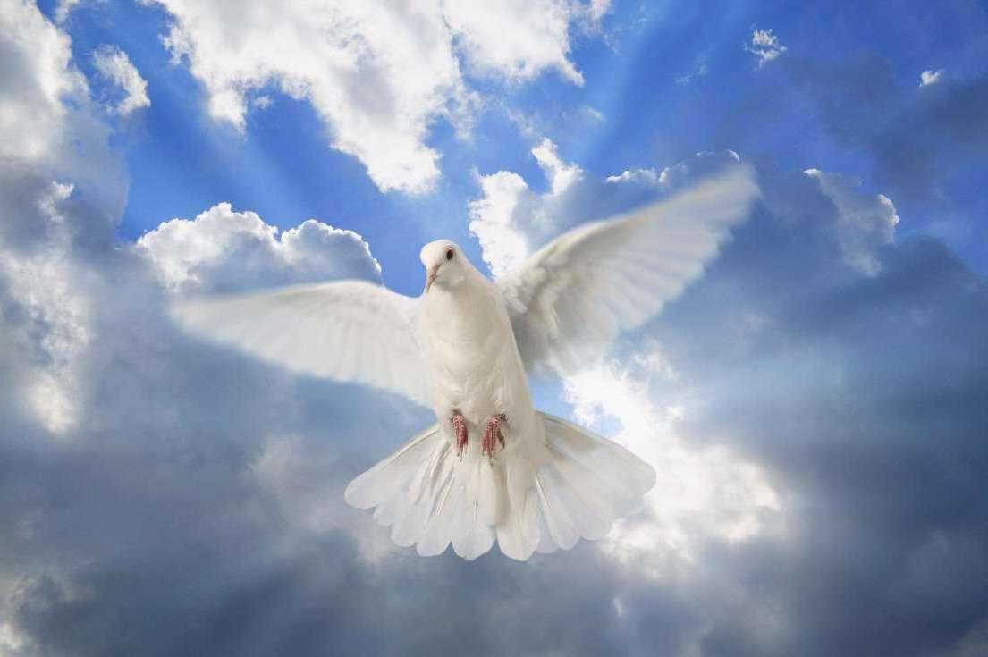 картинки с днем мира с голубями покрывают