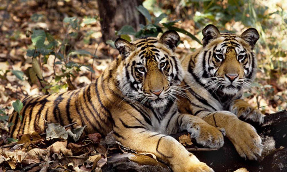 Международный день прав животных