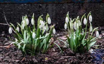 Апрельские первоцветы