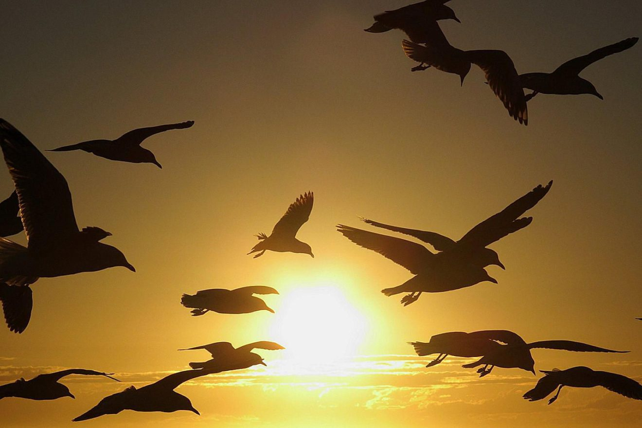 Игра перелет птиц картинки
