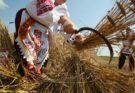 Спожинки - славянский праздник урожая