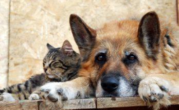 Бездомные животные нуждаются вы нашей защите