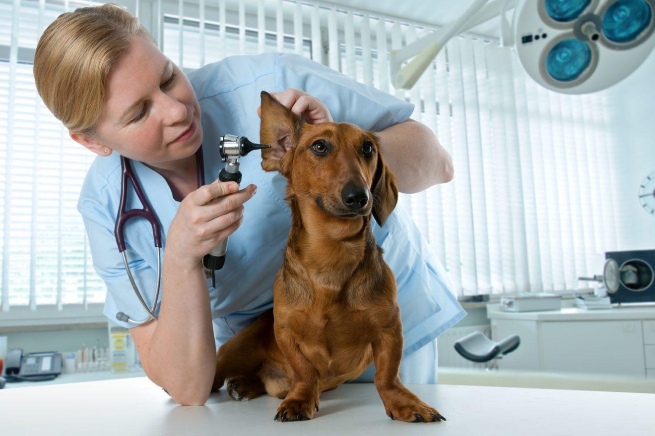 День ветеринарного работника России