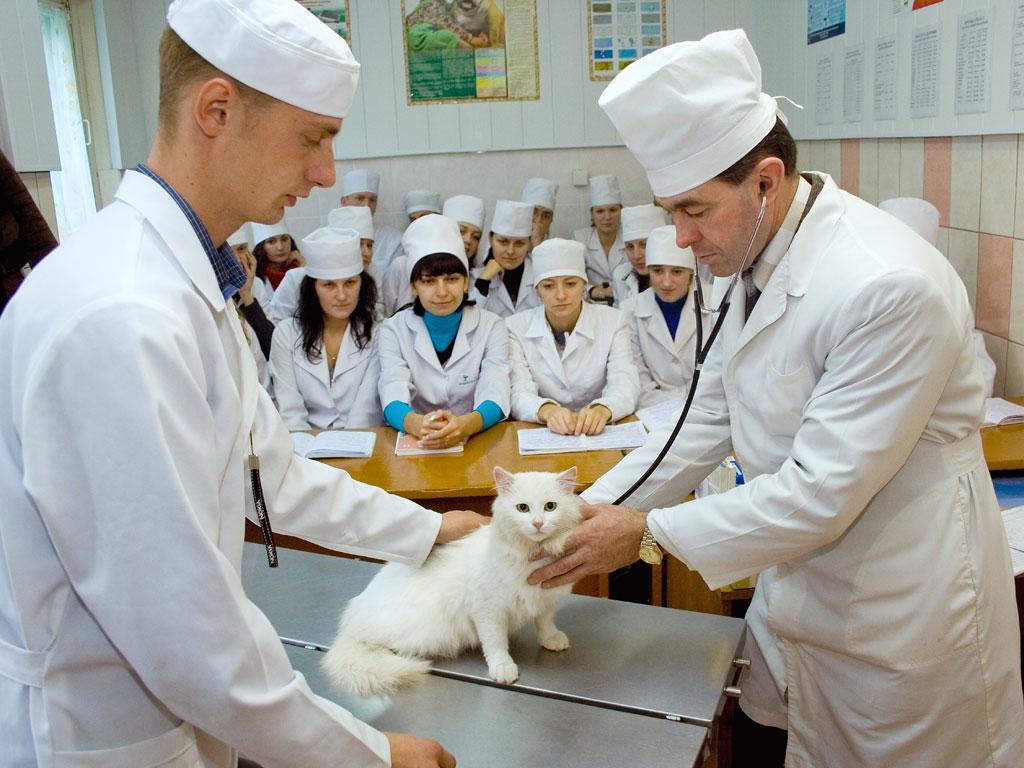 Поздравляем ветеринаров России с профессиональным праздником