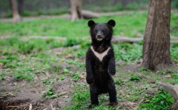 Медвежата вернулись домой - в тайгу