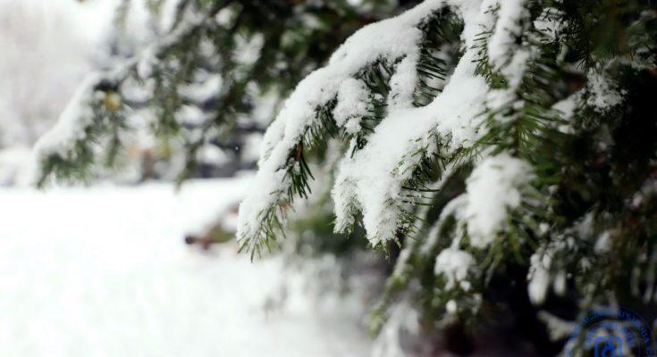Зимние лапы на елочке