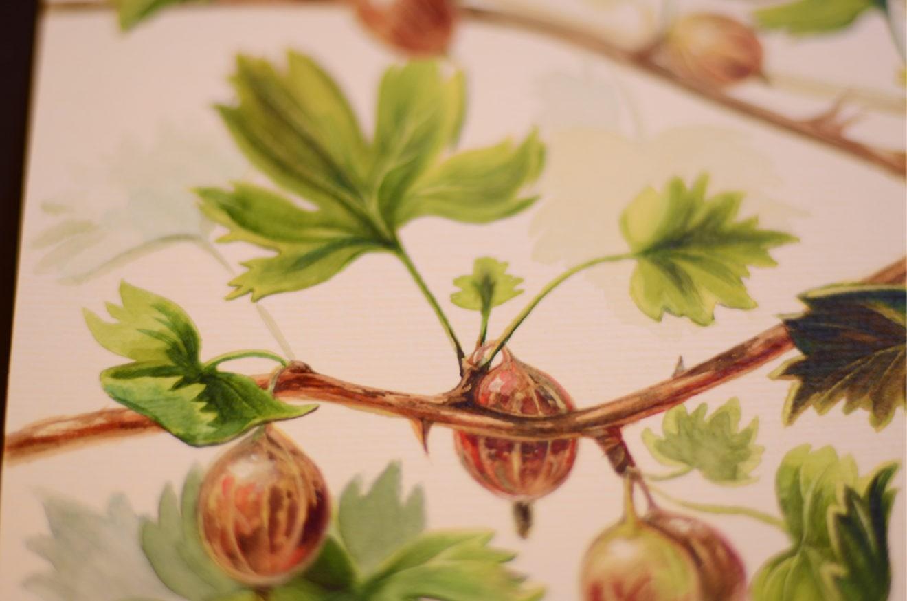 Выставка ботанической живописи и иллюстрации открылась 14 февраля в Аптекарском огороде