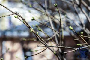 Весна в каждой почке