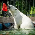 Долгожданное открытие Московского зоопарка после самоизоляции состоиться 16 июня
