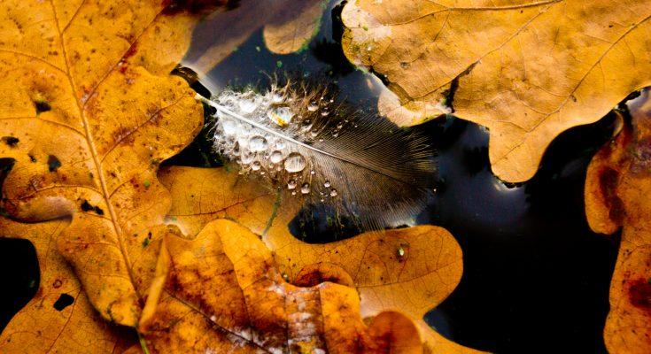 Заметьте, осень — больше сезон души, нежели природы. Фридрих Ницше