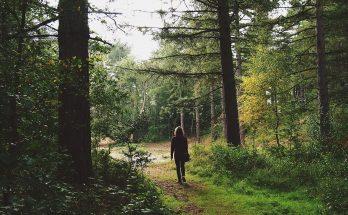 Прогуляться на природе хорошо в любое время года