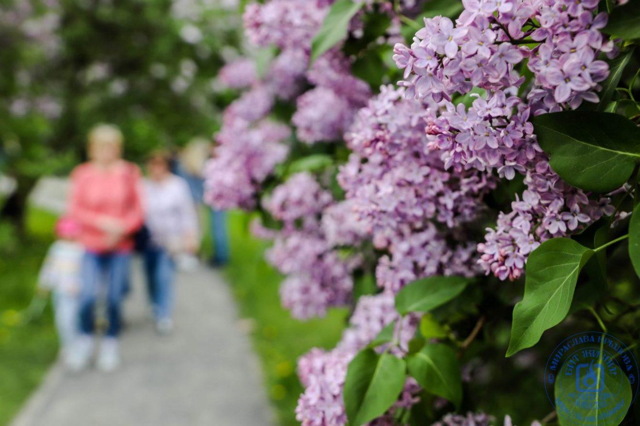 Красота цветения