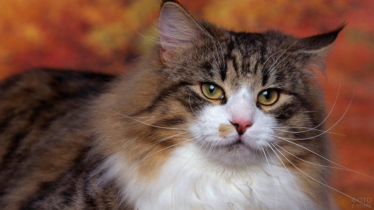Кошки живут рядом с человеком около 10000 лет